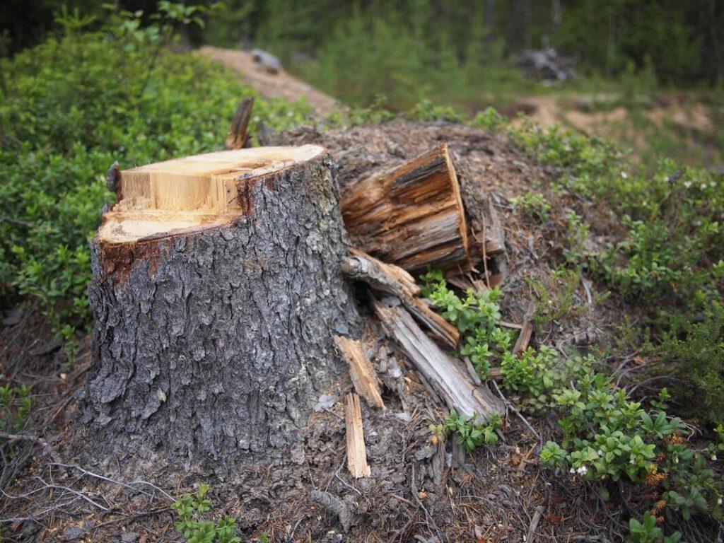 keller-tree-service-pros-stump-grinding-removal-2_1_orig