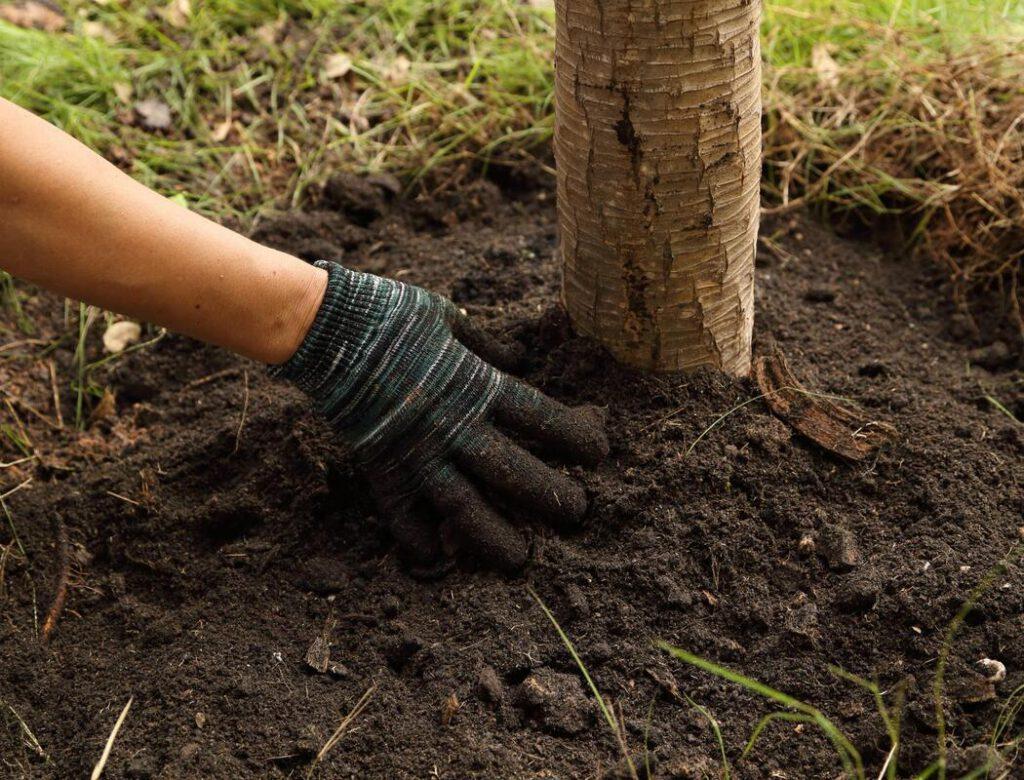 keller-tree-service-pros-tree-planting-moving-1_orig