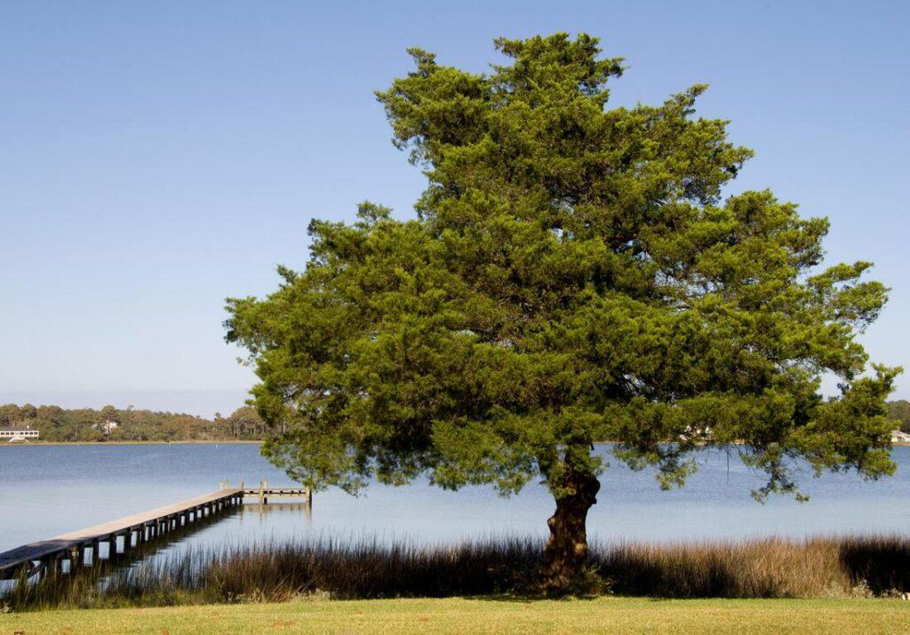 keller-tree-service-pros-tree-planting-moving-2_orig