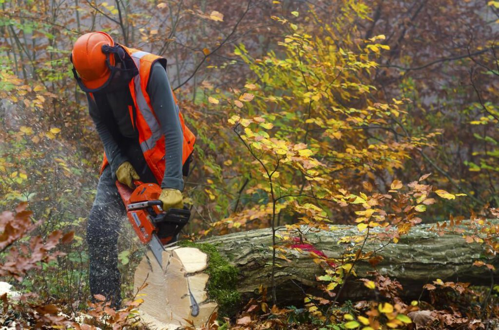 keller-tree-service-pros-tree-removal-disposal-2_1_orig